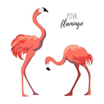 Flamingos cor de rosa