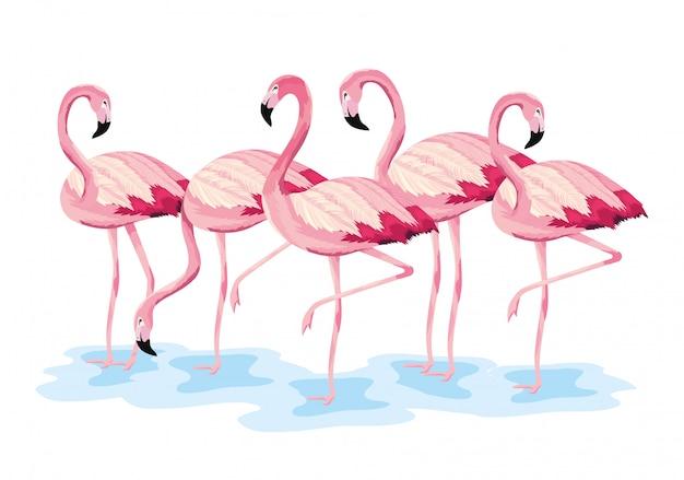 Flamingos tropicais animais selvagens exóticos