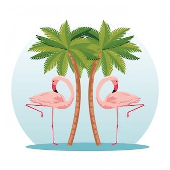 Flamingos tropicais com palmeiras da natureza