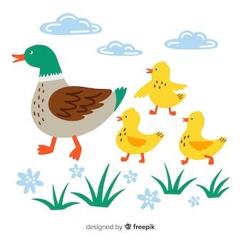 Flat mother duck e patinhos