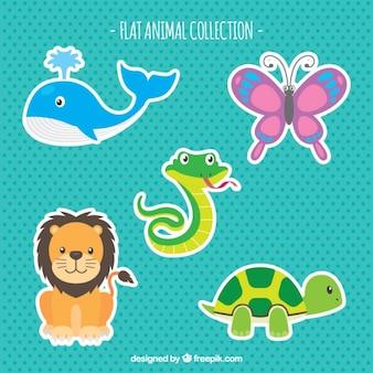 Flat pack de animais coloridos