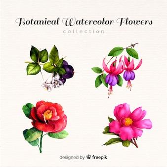 Flor botânica e coleção de folhas
