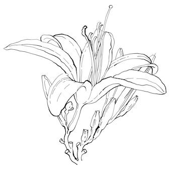 Flor botânica floral. ilustração isolada