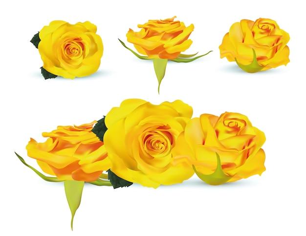 Flor close-up. 3d realista conjunto de rosas amarelas com folhas verdes