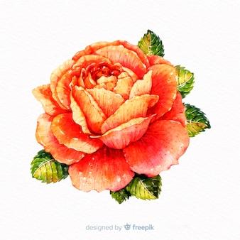 Flor coral linda aquarela