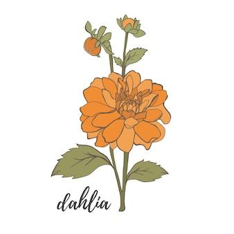 Flor da dália do vetor isolada no fundo branco elemento para o projeto linhas de contorno desenhadas à mão e