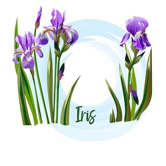 Flor da primavera