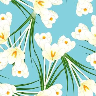 Flor de açafrão branco sobre fundo azul claro