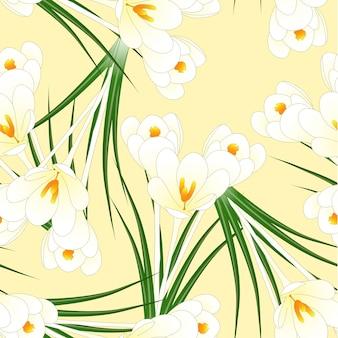 Flor de açafrão branco sobre fundo bege marfim