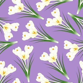 Flor de açafrão branco sobre fundo roxo claro