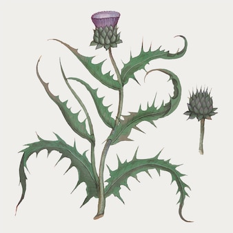 Flor de alcachofra em estilo vintage