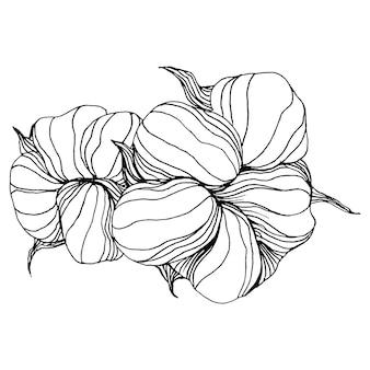Flor de algodão, gravando ilustração vintage