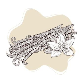 Flor de baunilha e ilustração gravada de varas amarradas bando. esboço de vagens e flor de baunilha desenhada de mão em estilo vintage para logotipo, receita, menu, spa, perfume, produtos de beleza. vetor premium