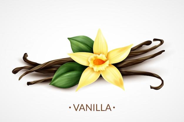 Flor de baunilha fresca perfumada doce com composição realista de vagens de sementes secas, de sabor culinário distinto