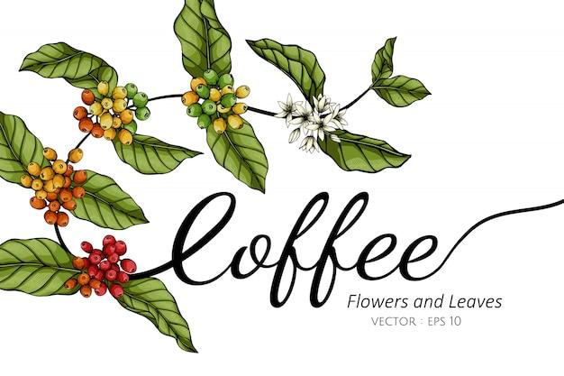 Flor de café e folha desenho ilustração com linha artística em branco