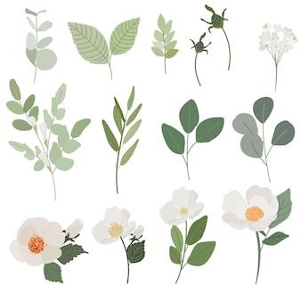 Flor de camélia branca e folhas verdes ramo coleção estilo plano isolado no fundo branco