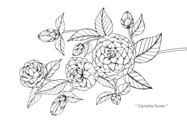 Flor de camélia desenho ilustração