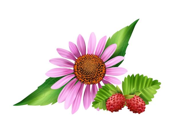 Flor de camomila e morango silvestre em branco realista