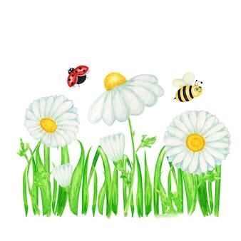 Flor de camomila margarida aquarela com joaninha mosca, ilustração de abelha. mão-extraídas ervas botânicas. camomila flores brancas, brotos, folhas verdes, caules, grama banner