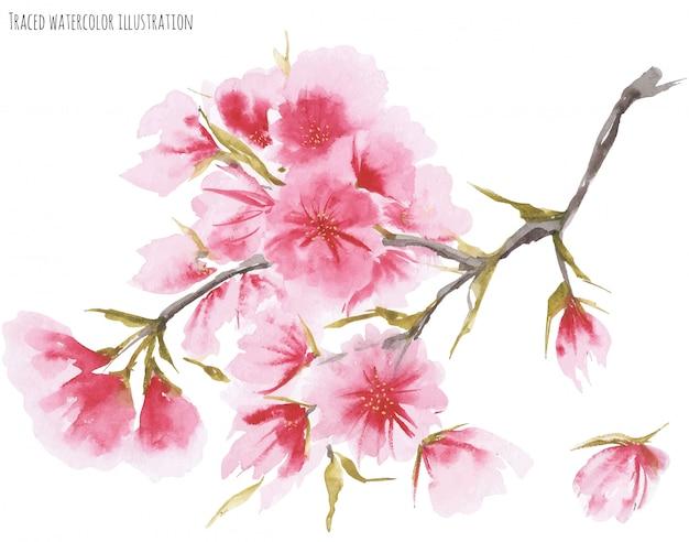 Flor de cerejeira em aquarela