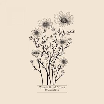 Flor de cosmos vintage desenhada de mão