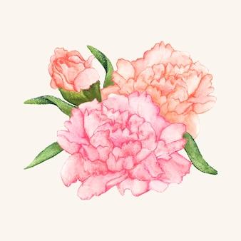 Flor de cravo desenhada de mão isolada