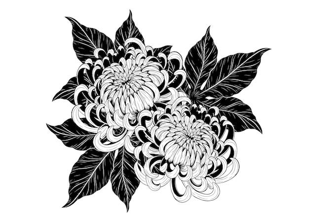 Flor de crisântemo à mão de desenho