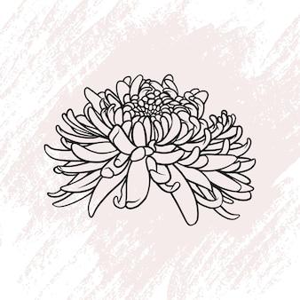Flor de crisântemo desenhada à mão em estilo de linha de arte a