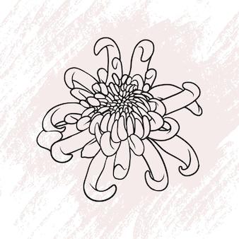 Flor de crisântemo desenhada à mão em estilo de linha de arte b