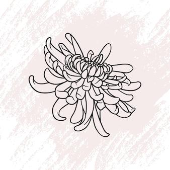 Flor de crisântemo desenhada à mão em estilo de linha de arte c