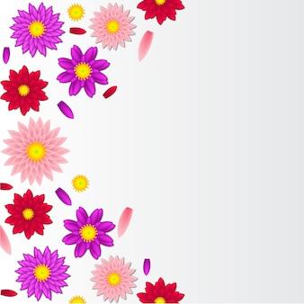 Flor de dália em diferença de cor