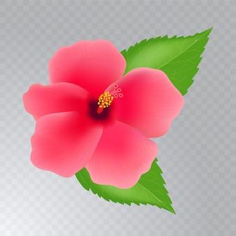 Flor de hibisco com folhas em fundo transparente. ilustração realista.