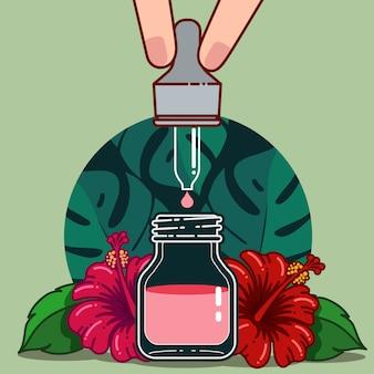 Flor de hibisco para produtos saudáveis e cosméticos
