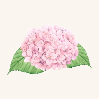 Flor de hortênsia desenhada de mão isolada