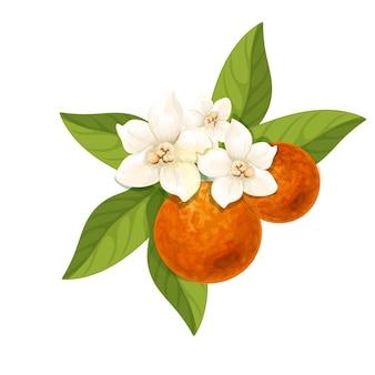 Flor de laranjeira isolada
