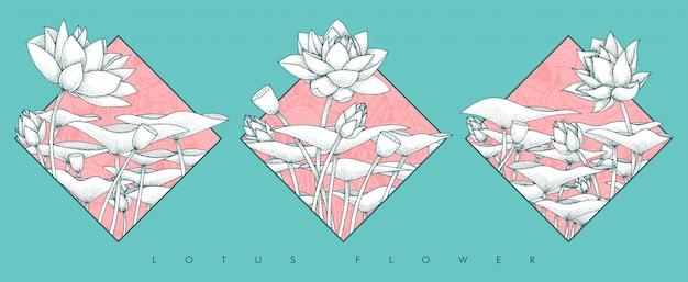 Flor de lótus no conjunto de quadro
