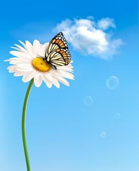 Flor de margarida de primavera de natureza com borboleta.