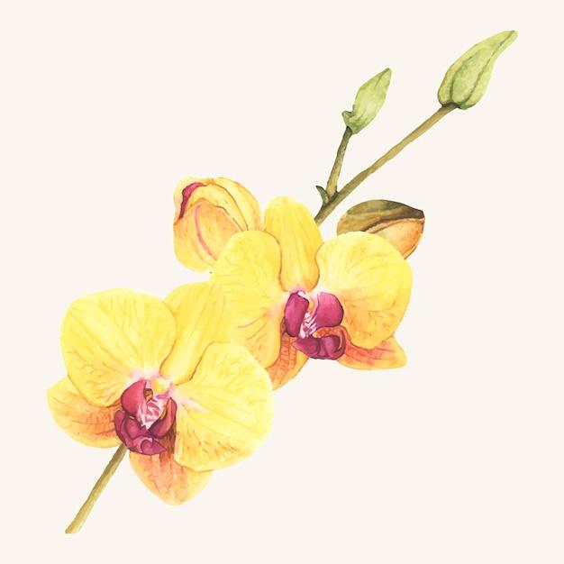 Flor de orquídea desenhada de mão isolada
