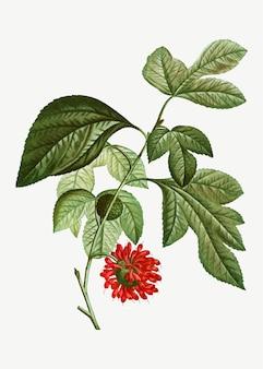 Flor de papel vermelho mullberry