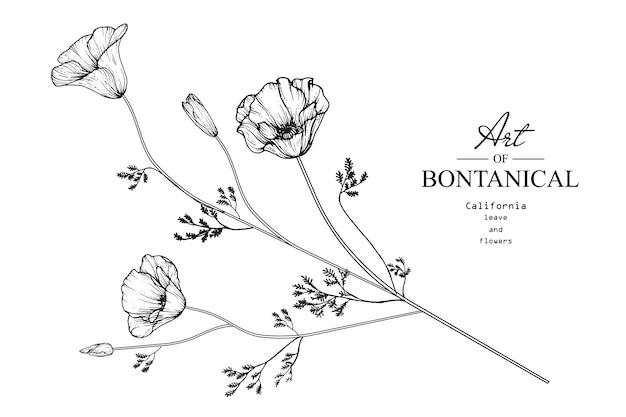 Flor de papoula califórnia e desenho de folha