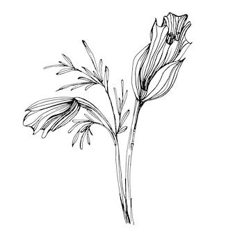 Flor de papoulas. flor botânica floral. elemento de ilustração isolado. mão desenhando flores silvestres
