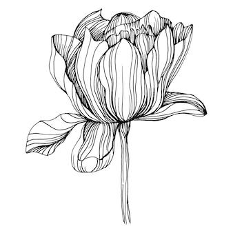 Flor de peônia, gravando ilustração vintage