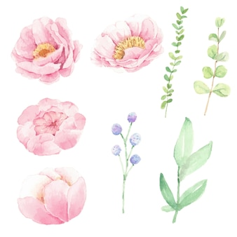 Flor de peônia rosa aquarela e elementos de folhas verdes isolados