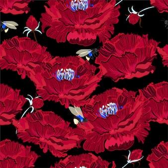 Flor de peônia vermelha desabrochando em um fundo preto