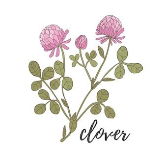 Flor de trevo em um fundo branco rosa com folhas verdes