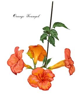 Flor de trombeta laranja