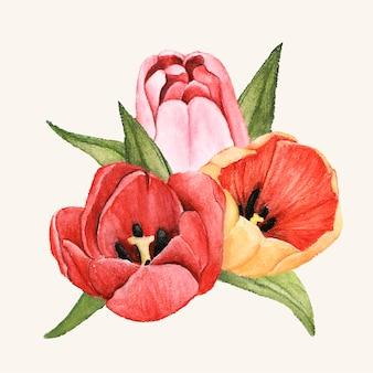 Flor de tulipa desenhada de mão isolada