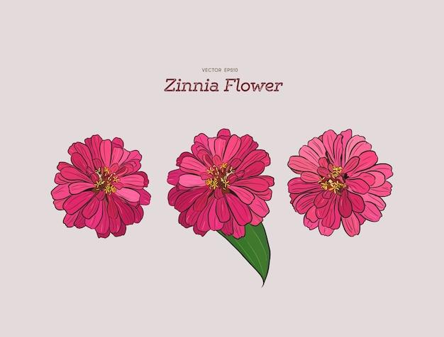 Flor de zínia, mão-desenho.