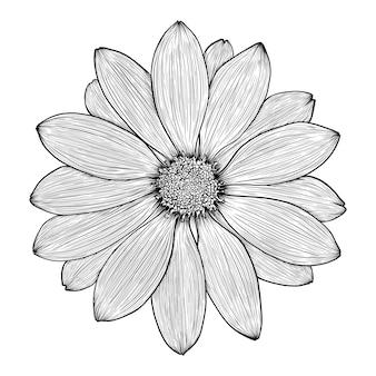 Flor desenhada à mão de camomila gerbera margarida ou crisântemo
