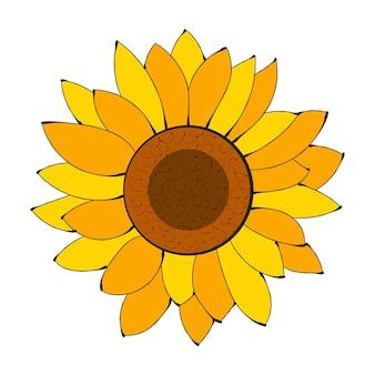 Flor do girassol isolado, ilustração do vetor. fundo da natureza para o seu design